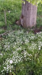 Frühlingswiese 1