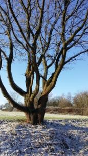 winterbaum 4