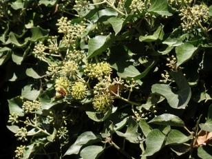Die Blüten lockten viele Insekten an.