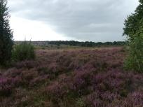 Lüneburger Heide 5