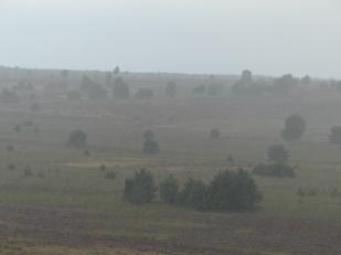 Regen Heide